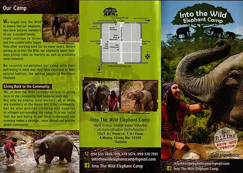 Into The Wild Elephant Camp Chiang Mai Thailand Brochure 1