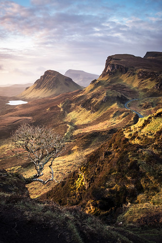 The Trotternish Tree