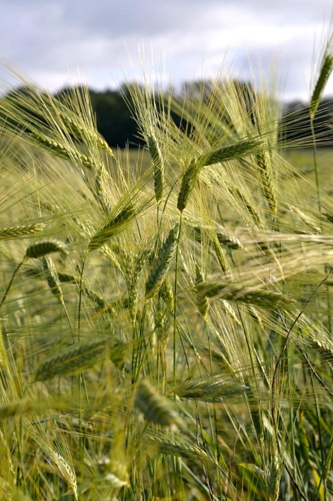 grano DSC_8708 tandoori
