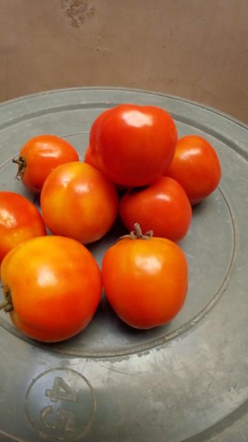 Small plum tomato / tomat plum