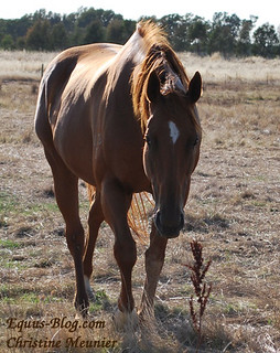 Horsenality - do you Know Your Horse's Personality?