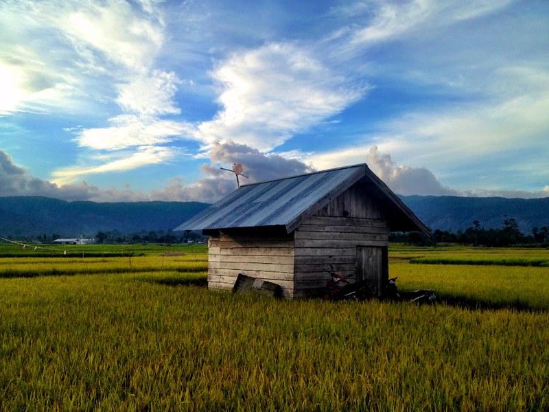 pretty wooden hut amid vast rice fields in wuasa sulawesi