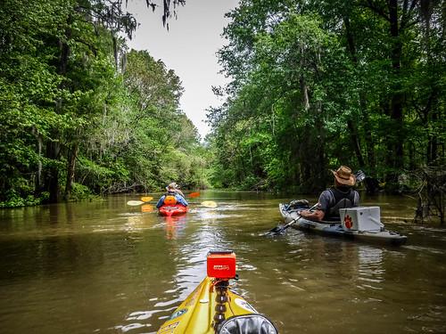 Sparkleberry Swamp-65