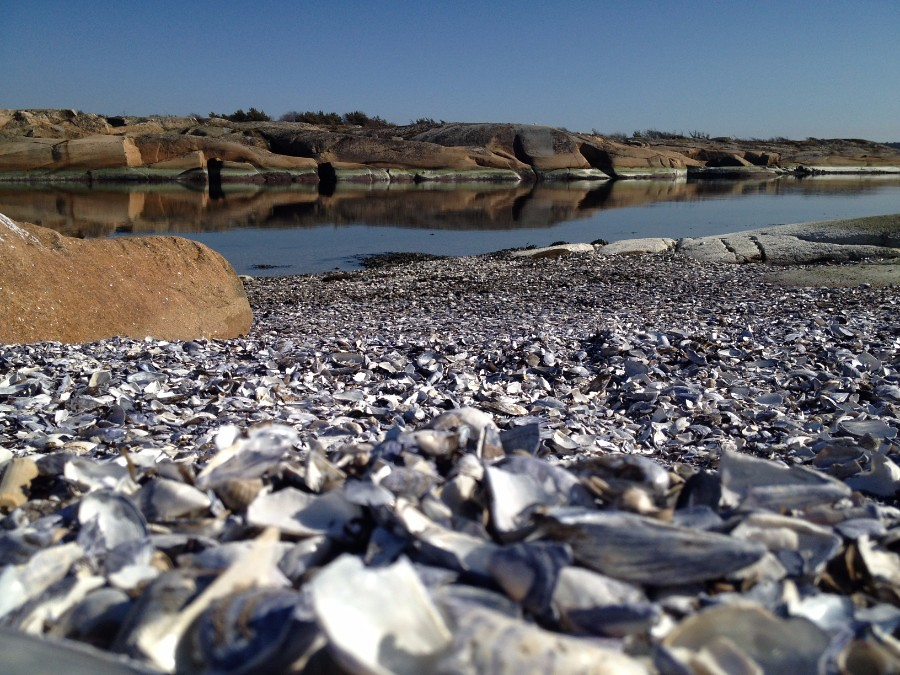 millions of washed ashore shells in slevik south norway