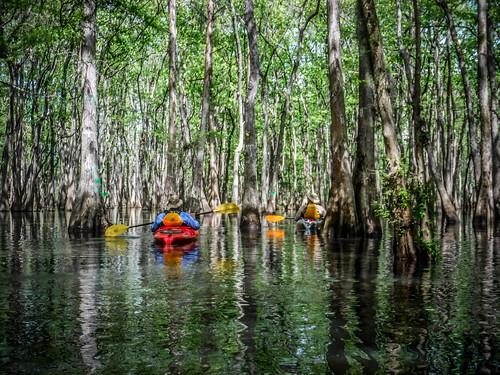 Sparkleberry Swamp-78