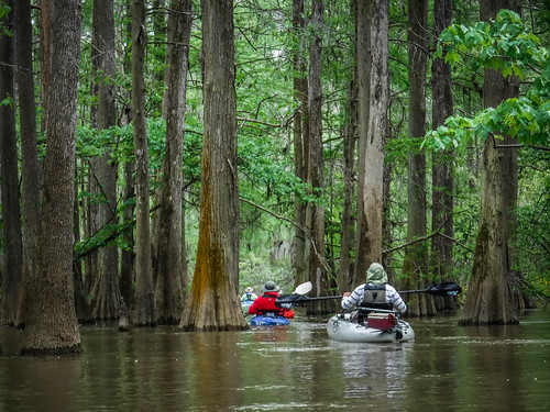 Sparkleberry Swamp-67