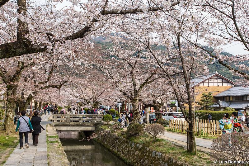 Paseo-Filosofia-Kioto-15
