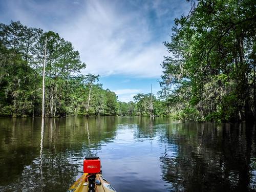 Sparkleberry Swamp-51