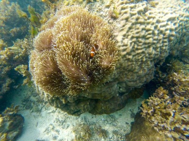 Fantastic Reef