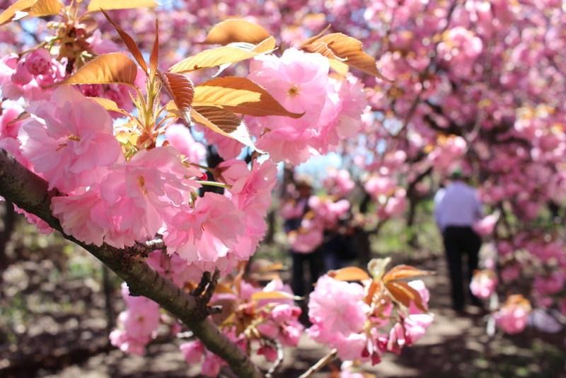 Central Park Spring