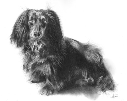 HallieLong Haired Dachshund Pencil Drawing Size 11