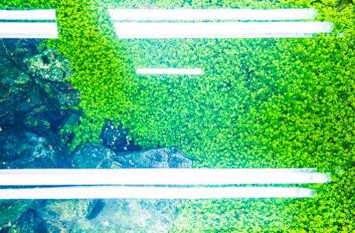 水草水槽 第三部