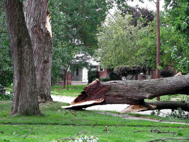 Image result for tree care