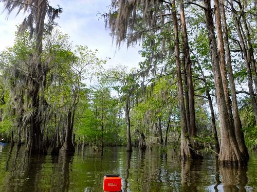 Sparkleberry Swamp-49