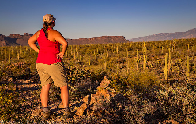 Cactus Wren Trail