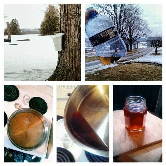 Because even a little sap can produce enough maple syrup to make me smile!