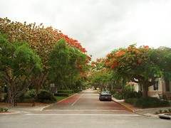 2071 Poinciana Trees, Naples