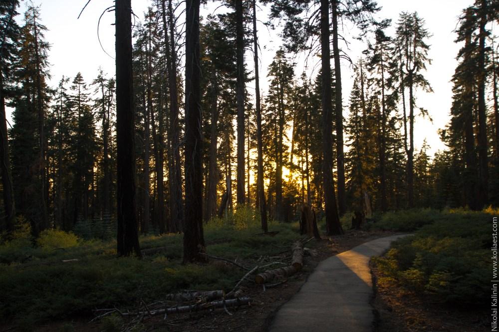 Sequoia-91