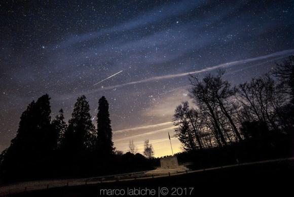 Nuit forestière