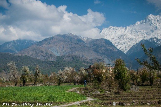 Sidhpur-Zen Valley (4)