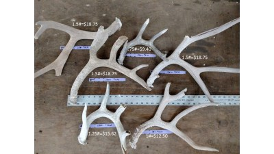 shed antlers rustic