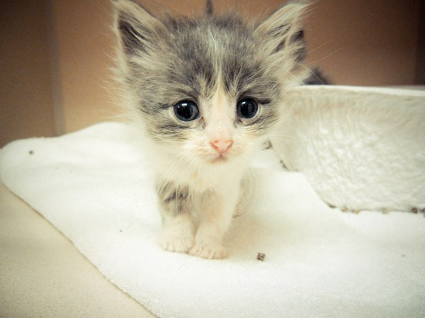 Kawaii ne? | As cute as they are, kitten season is a very ...