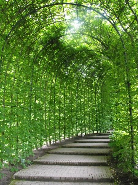 covered garden walkway ALNWICK GARDEN COVERED ARCH WALKWAY   Flickr - Photo Sharing!