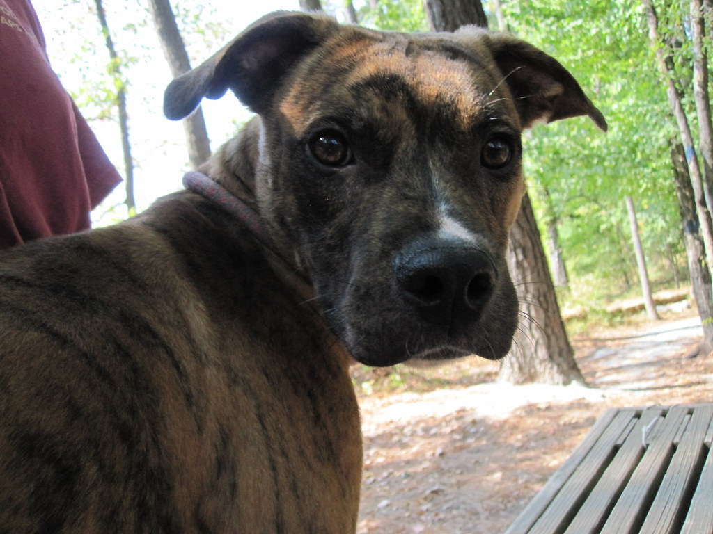 5019108820 891e640802 b Pitbull Dog Food Muscle