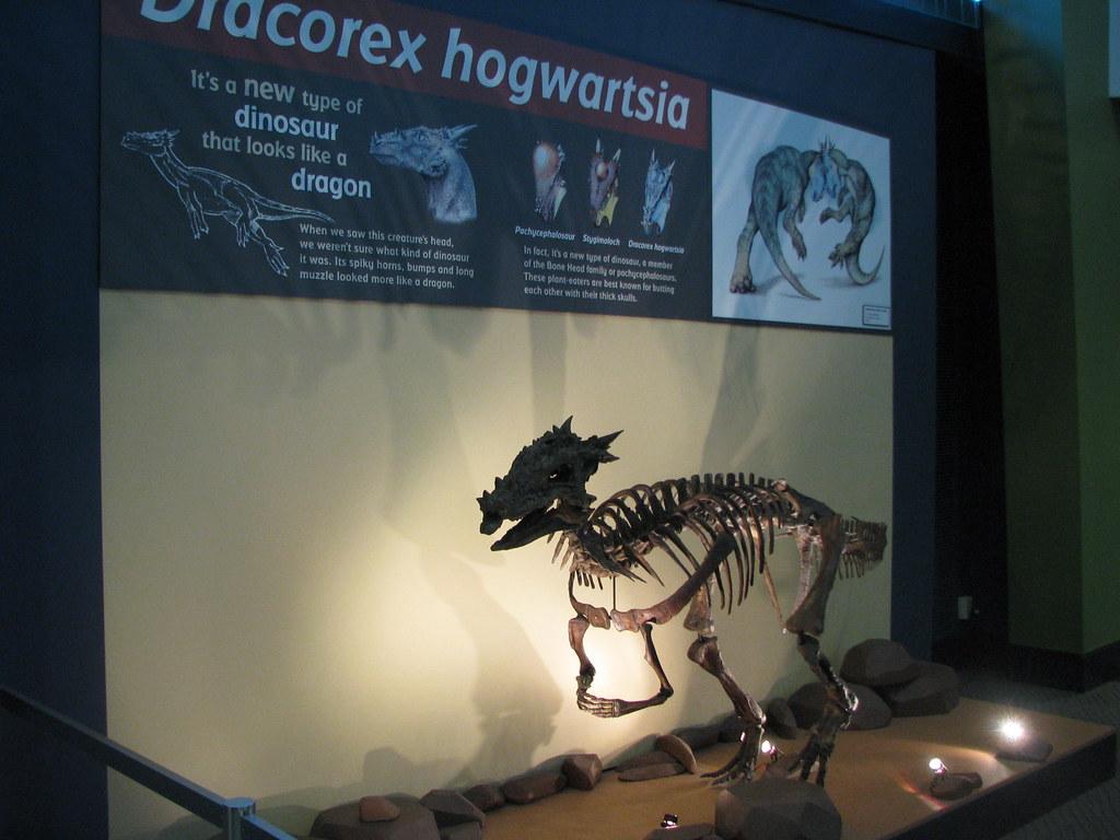 Dracorex Hogwartsia Childrens Museum Of Indianapolis