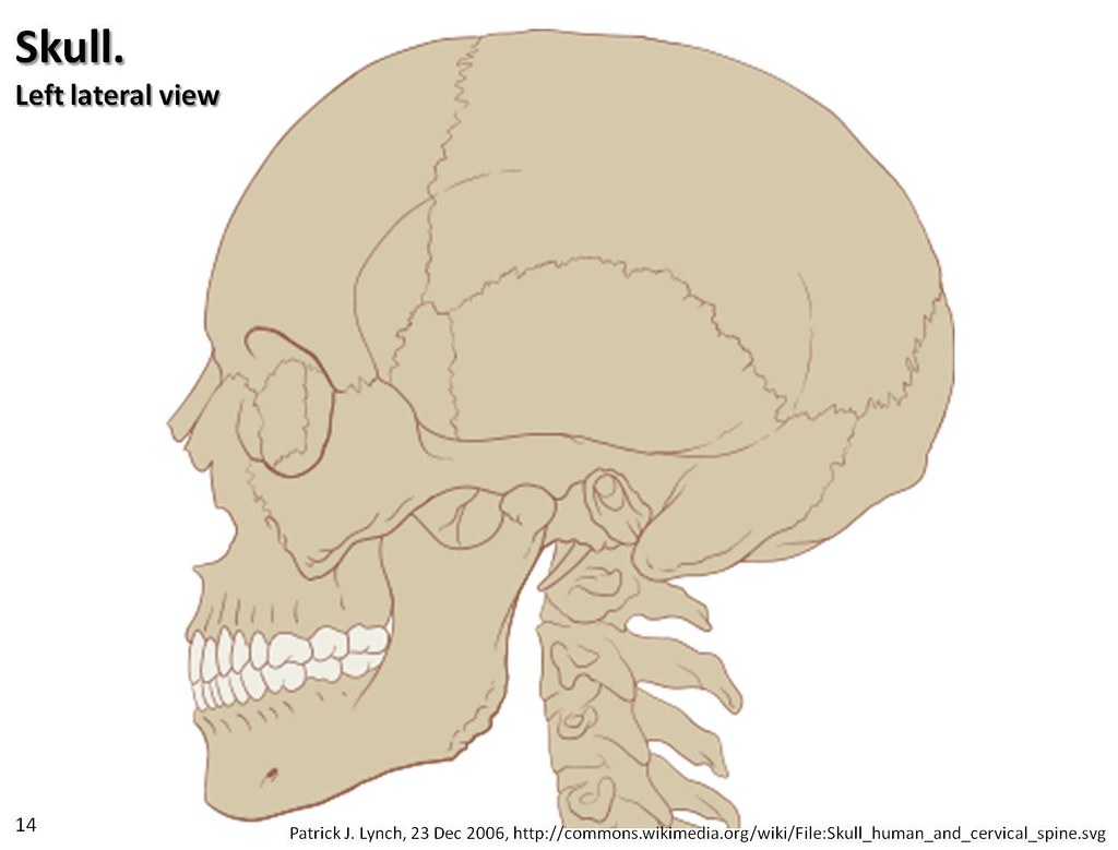Skull Diagram Lateral View