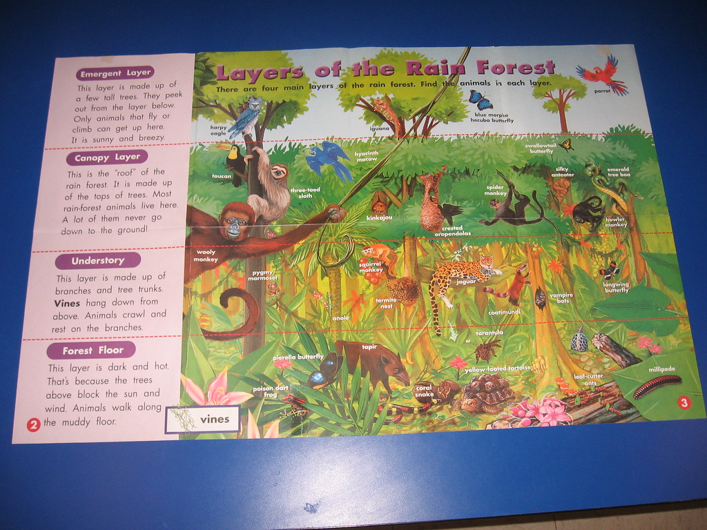 Poster Of Layers Of The Rain Forest