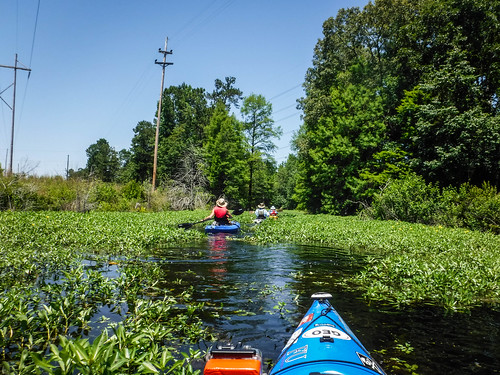 Old Santee Canal-150