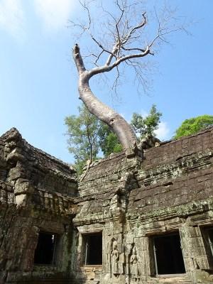 Ta Prohm jungle temple, Siem Reap, Cambodia - the tea break project solo travel blog