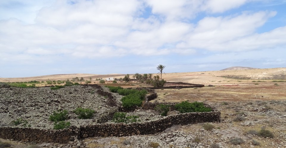Rosa de los Negrines Isla de Fuerteventura 074