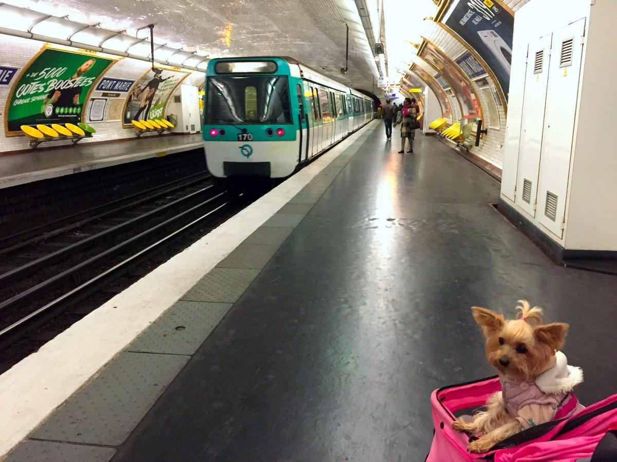 Viajar a Paris con Perro viajar a paris con perro Viajar a Paris con perro 34471059871 60e2ea98b6 h
