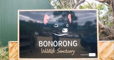 塔斯自由行︱Bonorong Wildlife Sanctuary.野生動物保育動物員、近距離接觸澳洲動物