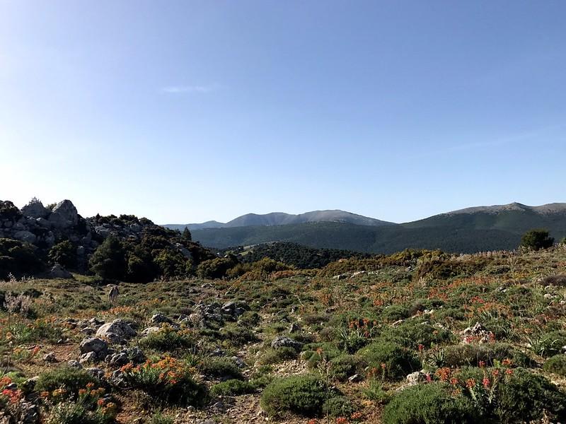 Climbing Mount Cithaeron