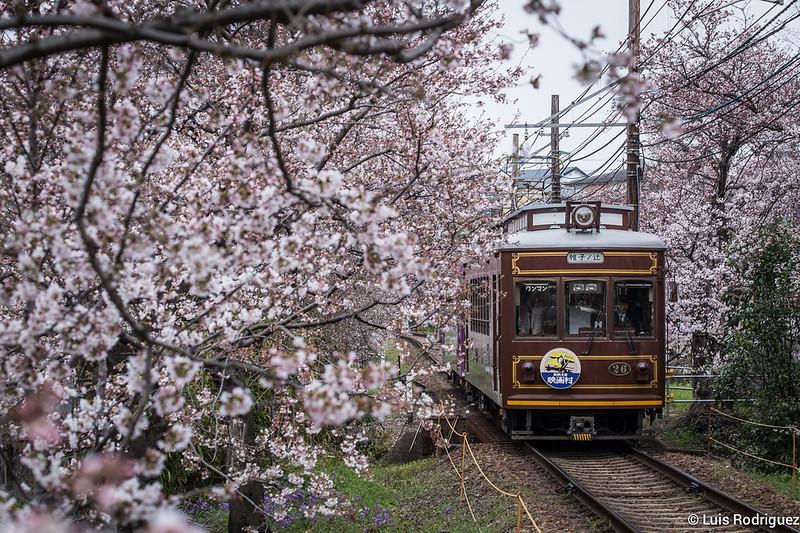 Randen-Sakura-Kioto-1