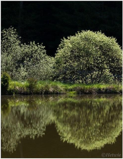 Spiegeling in het meertje