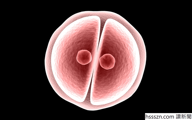 embryo_638_400