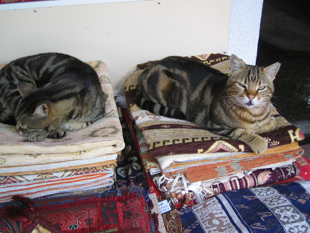 Cat-napping on Turkish carpets