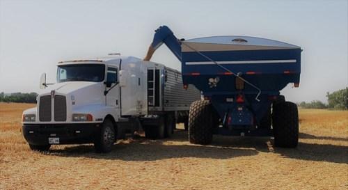 Unloading the grain cart