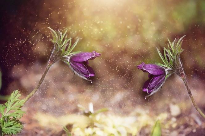 anemone-2412469_960_720