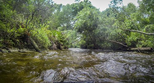 Juniper Springs Creek-75
