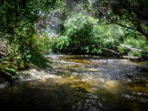 Juniper Springs Creek-147