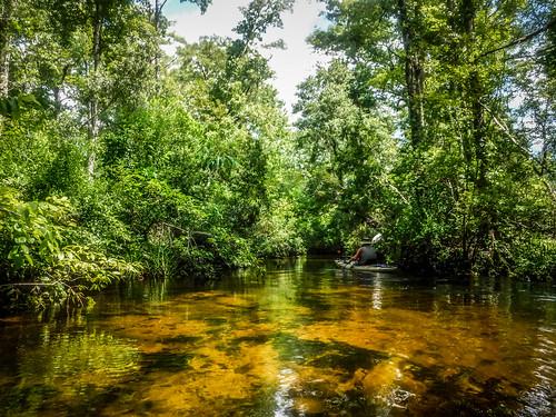 Juniper Springs Creek-120
