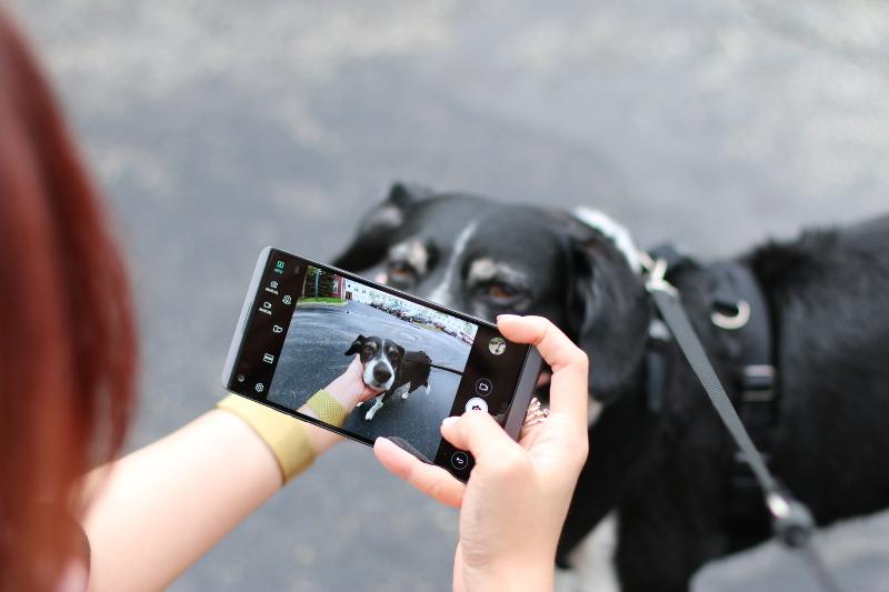 lg-v20-smartphone-camera-dog-3