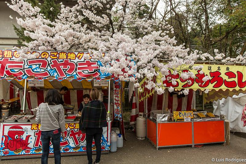 Maruyama-Park-Kioto-16