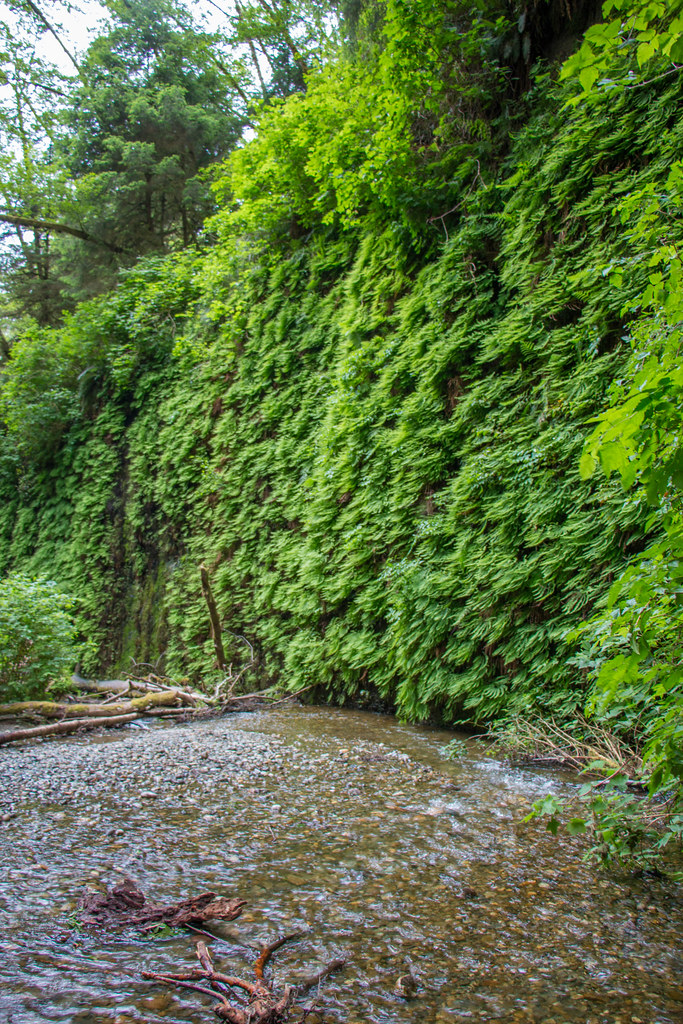 05.27. Fern Canyon