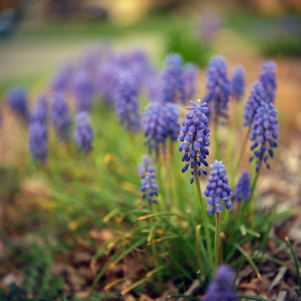 Spring flowers from my garden
